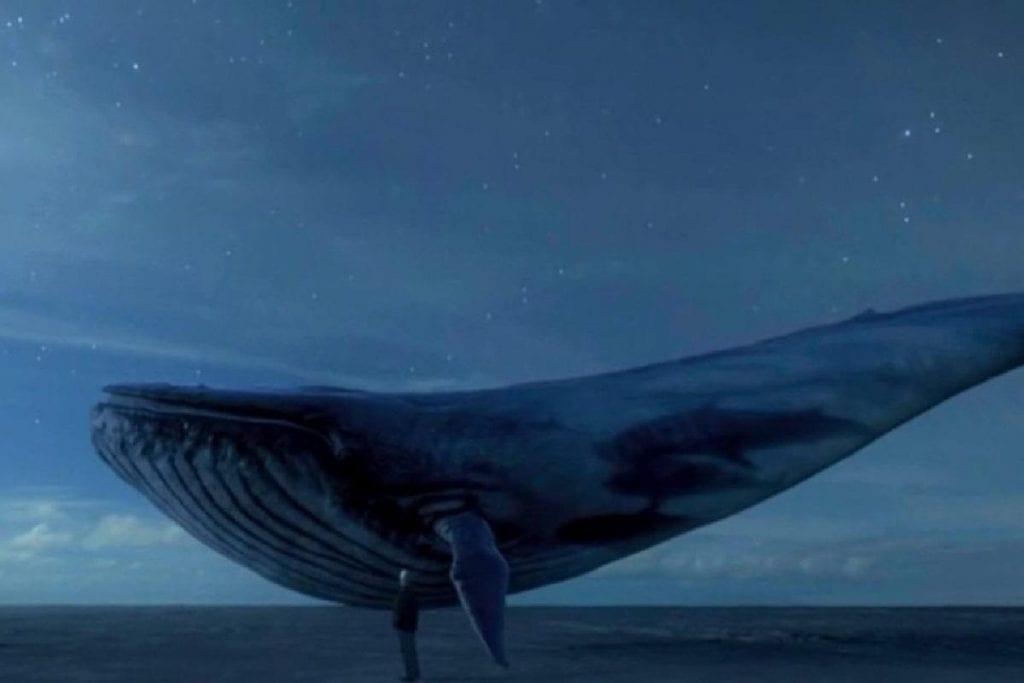 Baleia-azul – Características e outros fatos sobre maior animal do planeta