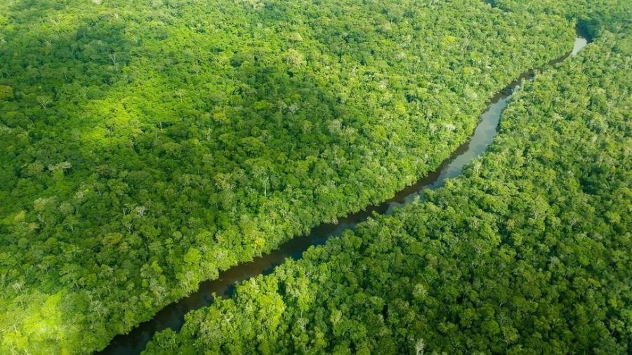 Dia da Amazônia - o que você precisa saber sobre a data comemorativa