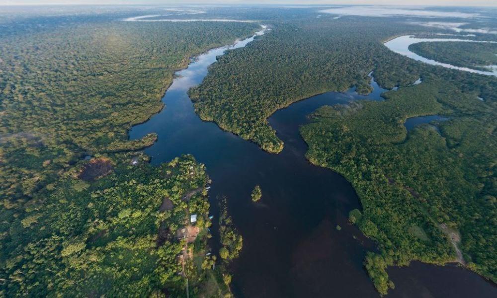 Dia da Amazônia - O que é e por que se comemora em 5 de setembro?