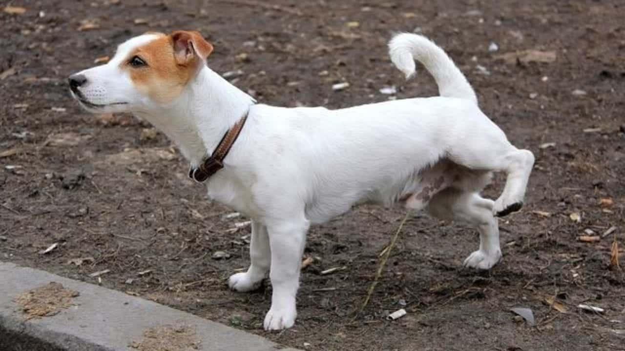 Dono de cachorro - 5 coisas que você precisa saber