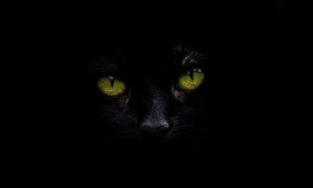 Gato preto – 13 curiosidades intrigantes que você não sabe sobre eles