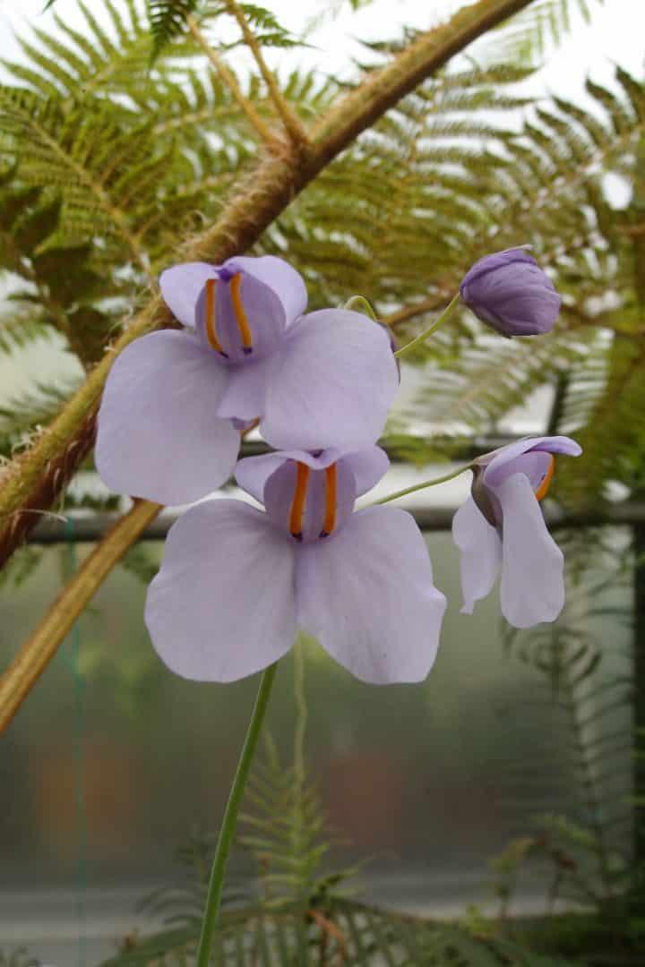 Plantas carnívoras- O que são, quais tipos, como cuidar e + curiosidades