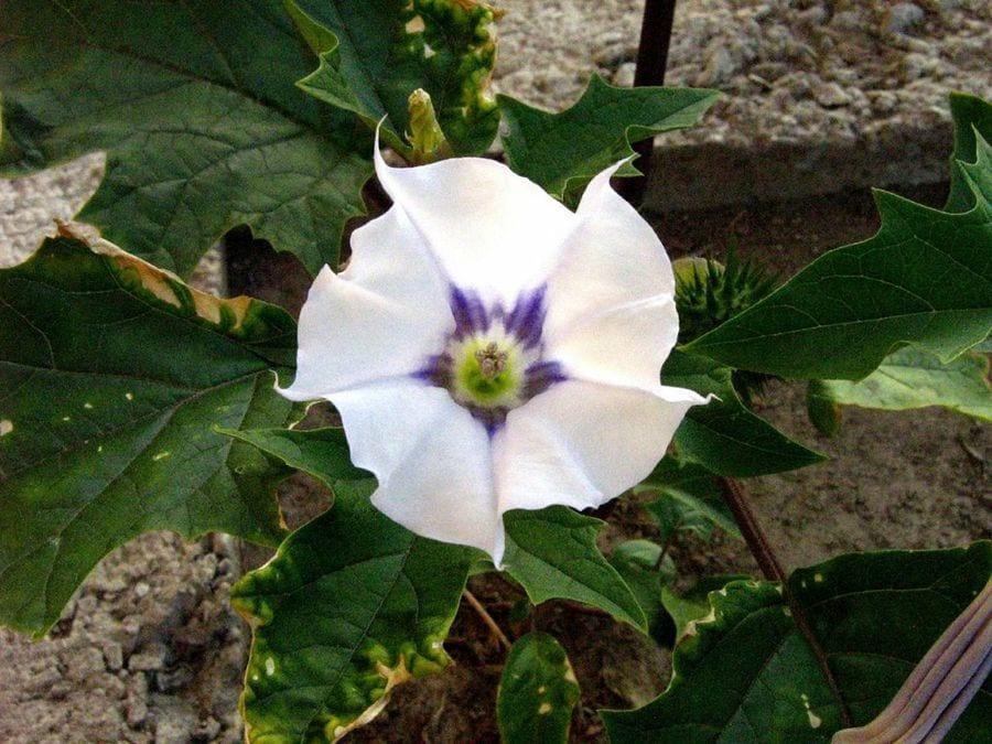 Plantas Venenosas - Conheças os 16 tipos mais comuns