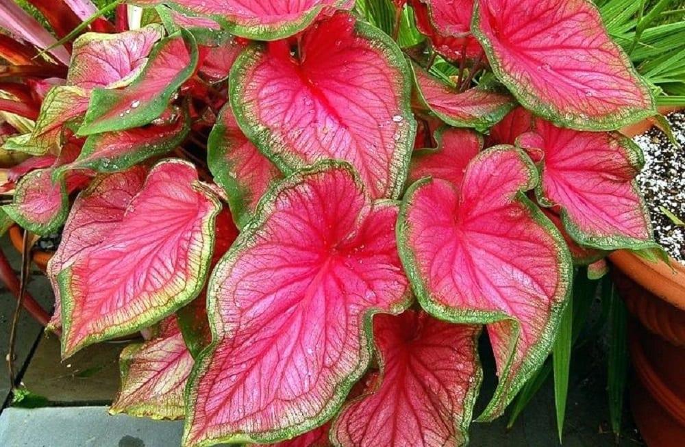 Plantas venenosas - 16 tipos mais comuns no Brasil