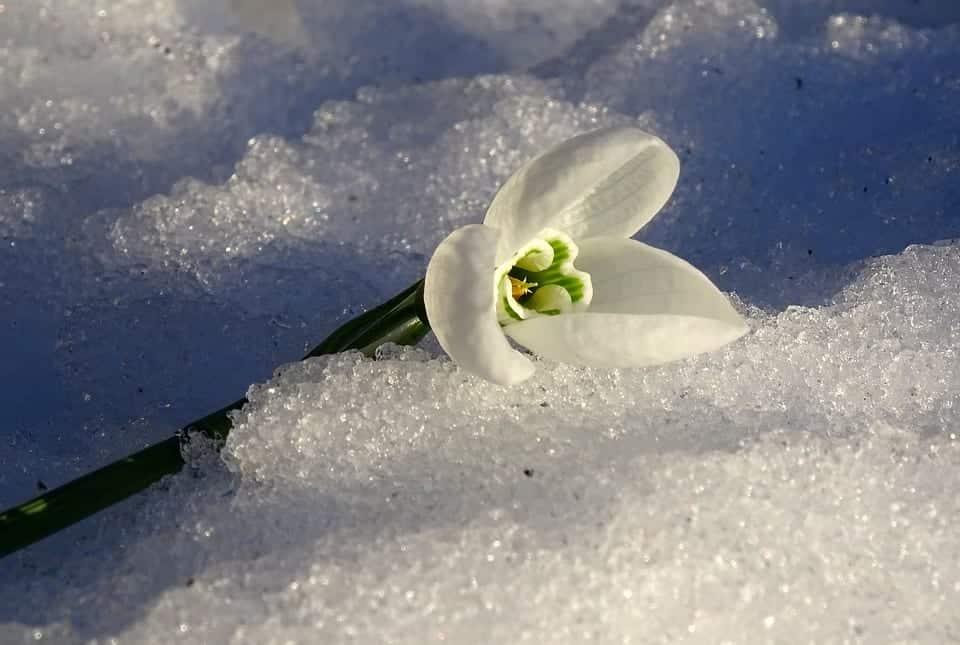 Primavera, a estação da fertilidade, das chuvas e das cores