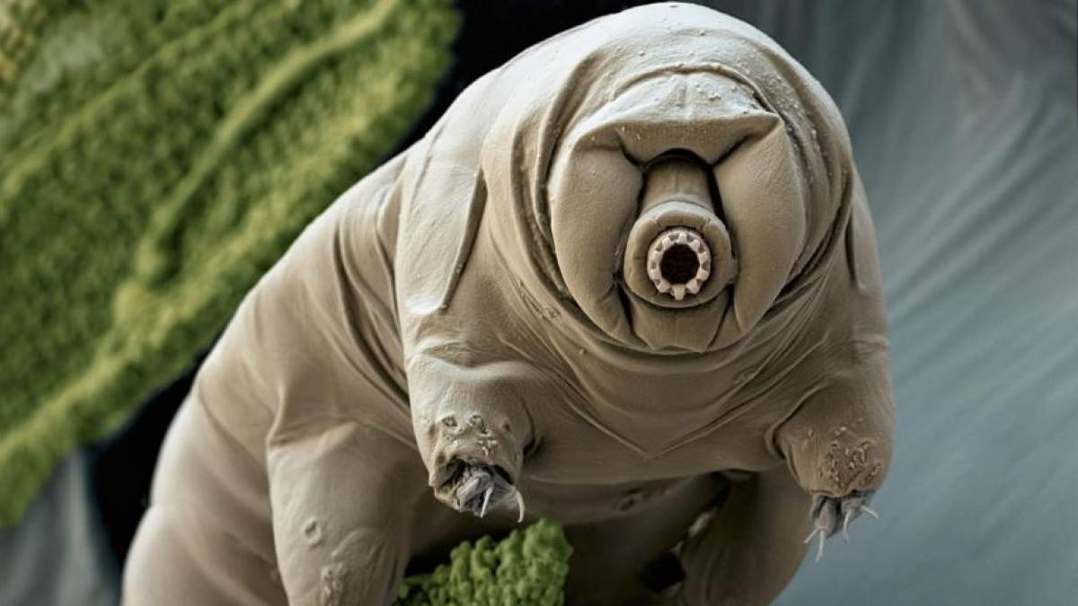 Tardígrados - 5 fatos curiosos sobre os animais mais resistentes da Terra