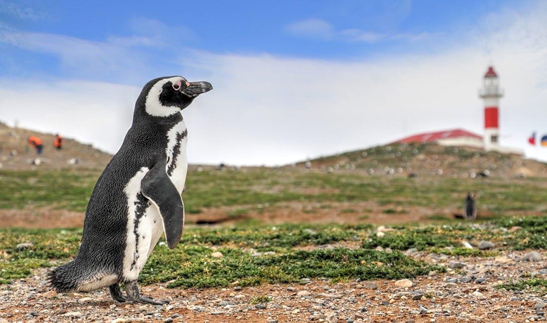 Pinguim - tudo o que você precisa saber sobre esse animal
