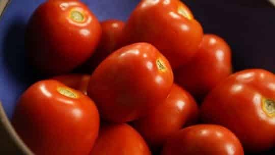 Tomate é fruta ou legume? Conheça os benefícios do alimento