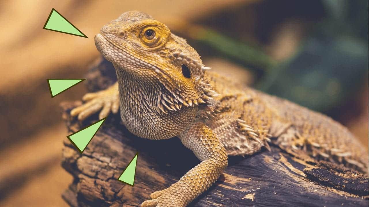Animais trans - 11 bichos capazes de trocar de sexo ou gênero