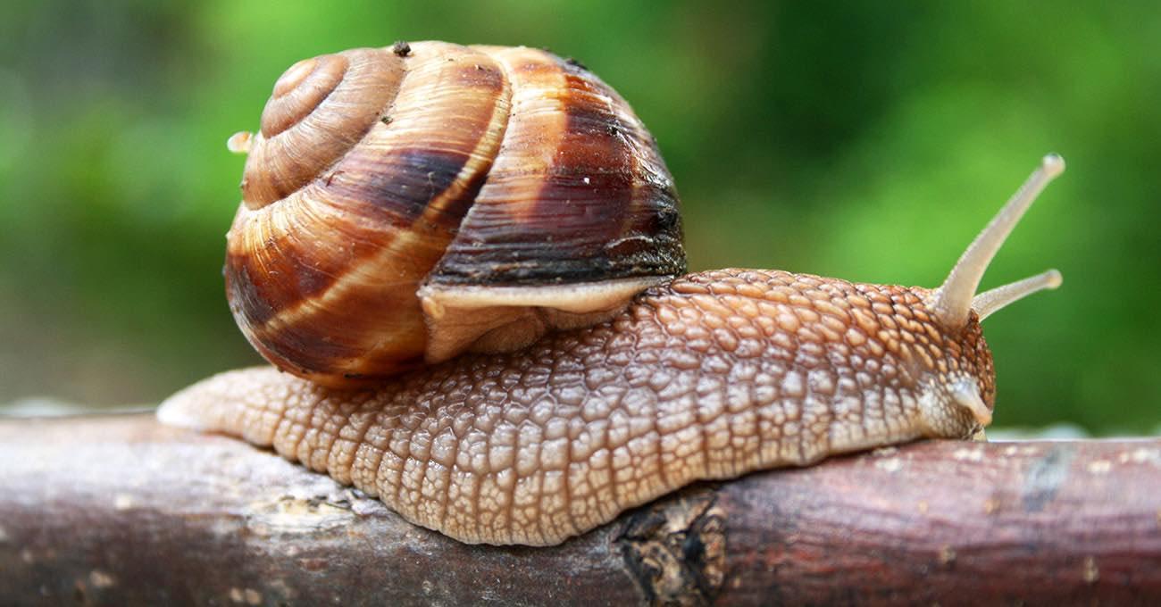 Escargot - Conheça tudo sobre um dos pratos mais chiques a ser servido