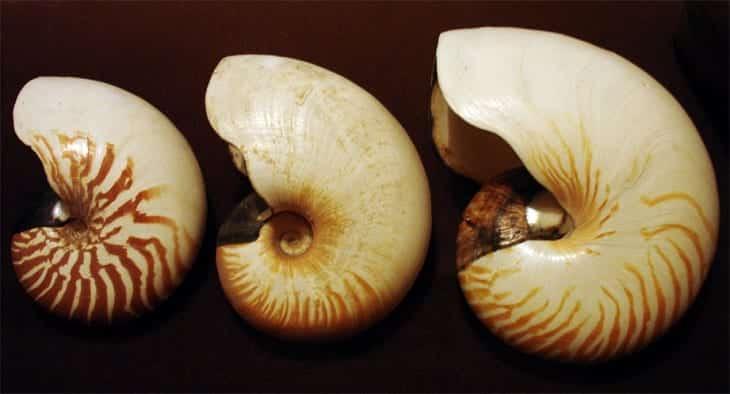 Conchas - Como são formadas e seus tipos
