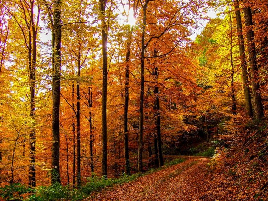 Conheça a floresta negra, cenário dos mais famosos contos de fadas