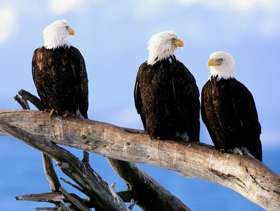 Águias - as imponentes aves que dominam os céus