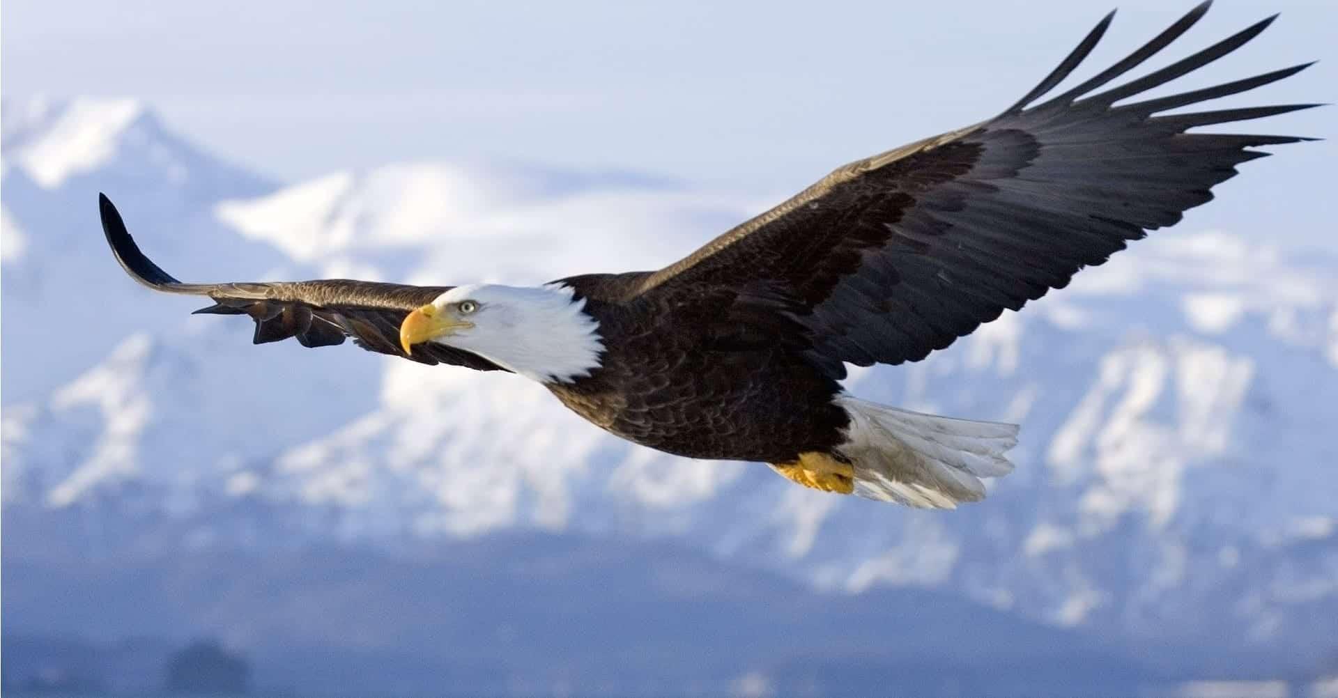 Águias - 10 espécies mais famosas do mundo e 5 brasileiras