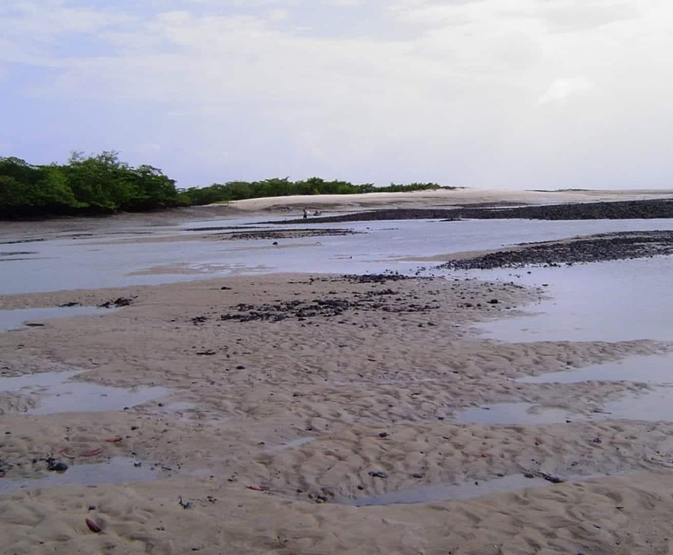 Areia movediça - Como e onde se formam, riscos e dicas para escapar