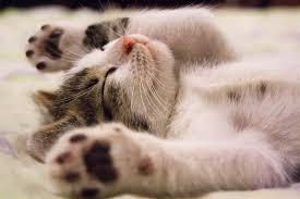 Catnip: você já ouviu falar na erva para gatos?