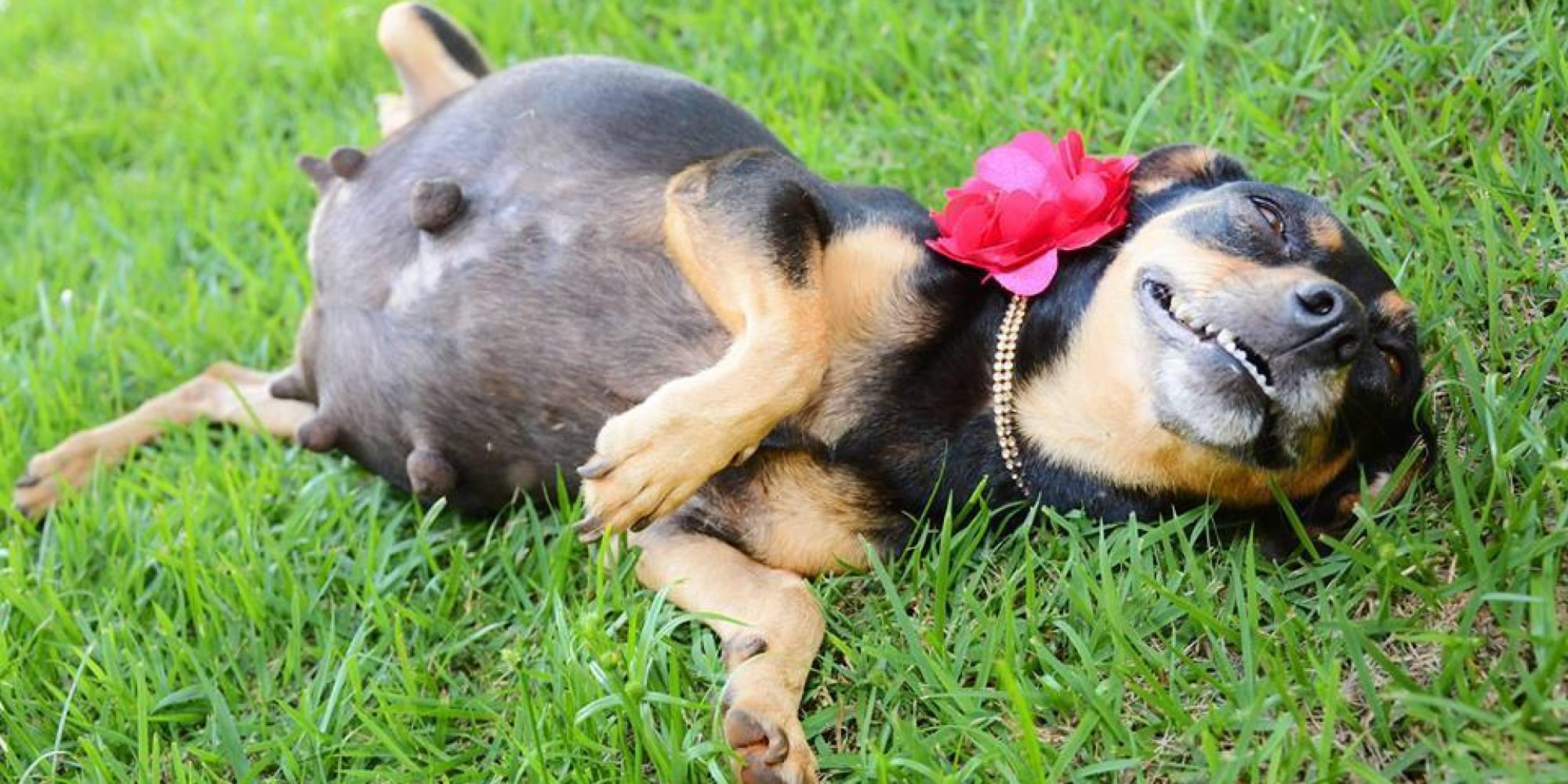 Gestação de cachorra - Duração, fases e cuidados com o animal