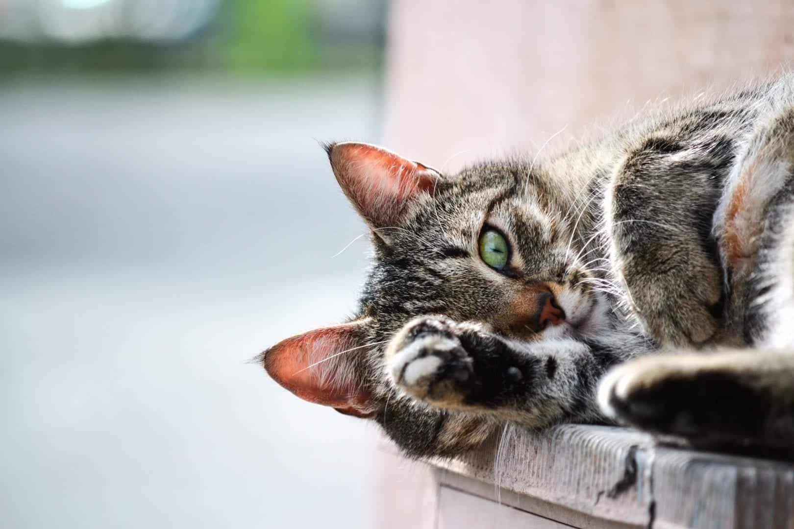Nomes para gatos - Veja dicas para nomear seu pet