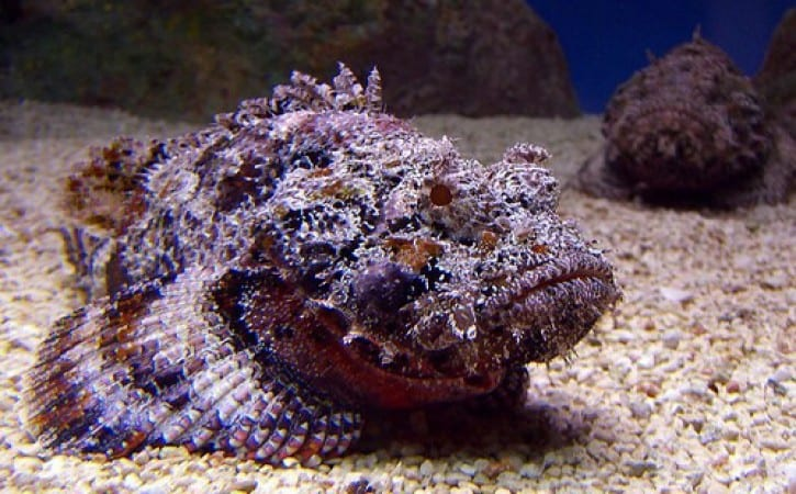 Peixes mais feios do mundo - 20 peixes que te deixarão arrepiado