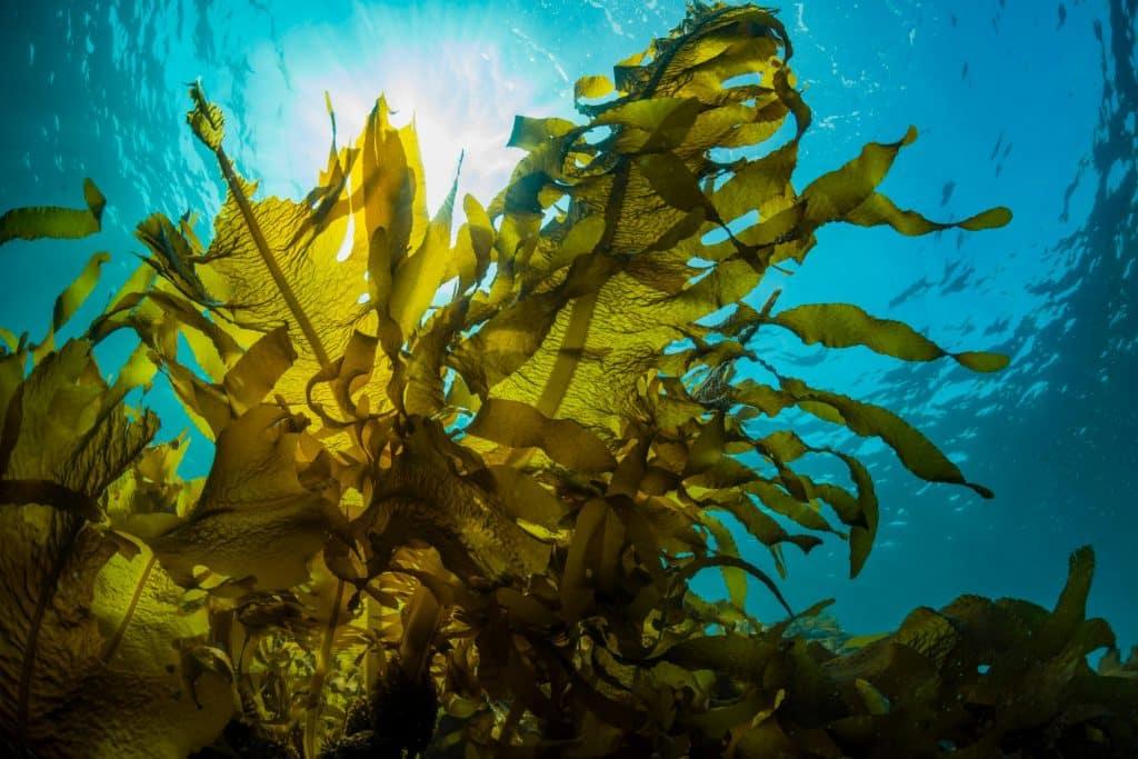 Algas – O que são, como se comportam e principais variedades