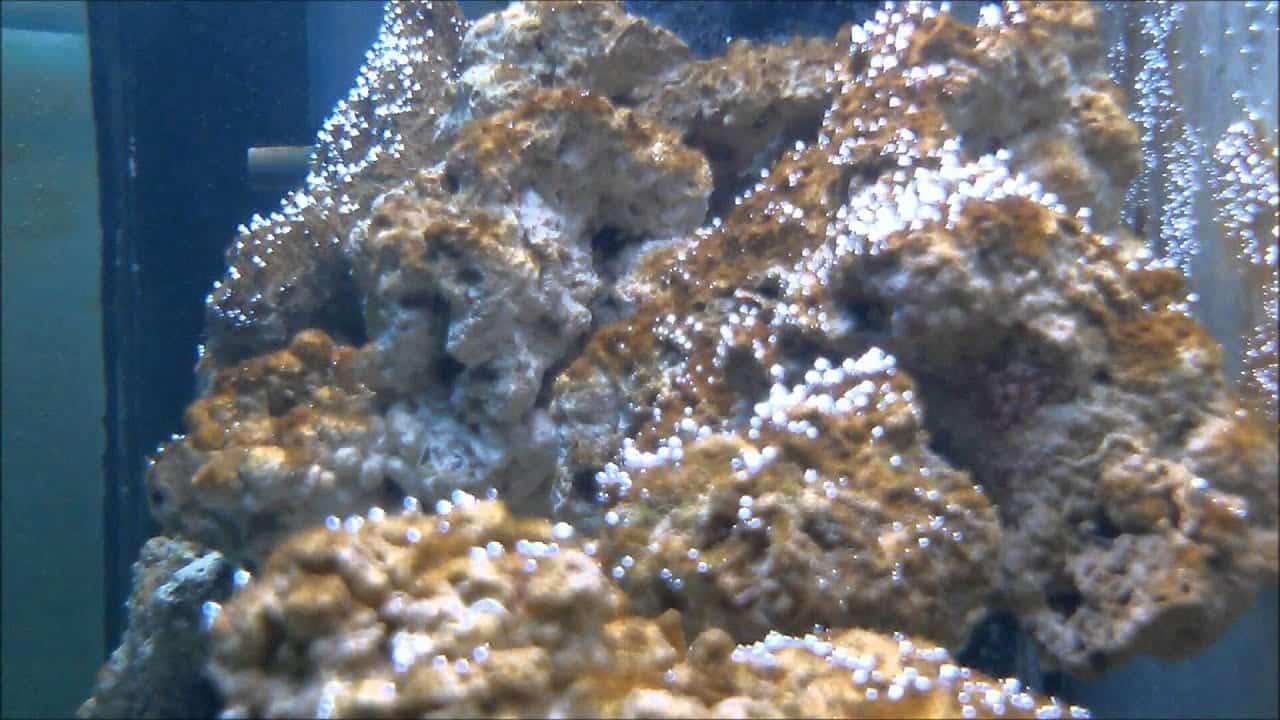 Algas - o que são, como se comportam e principais variedades