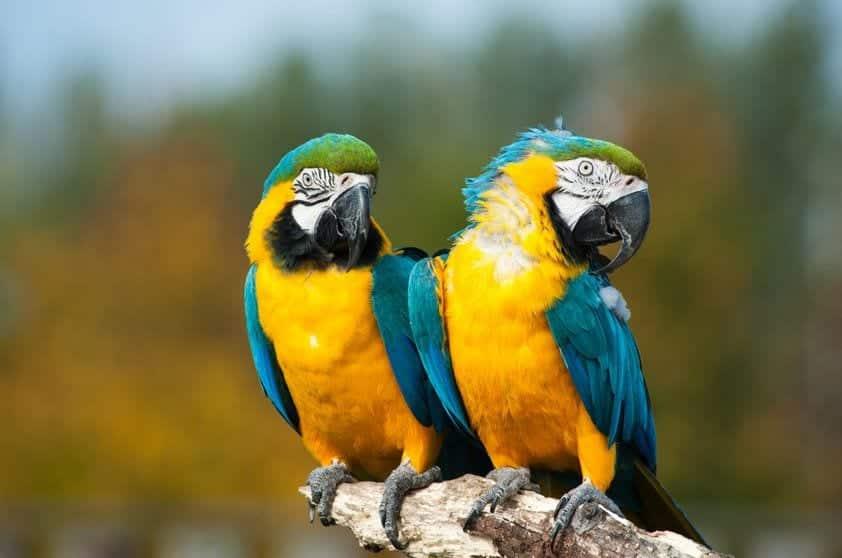 Conheça 15 dos mais famosos animais da Amazônia