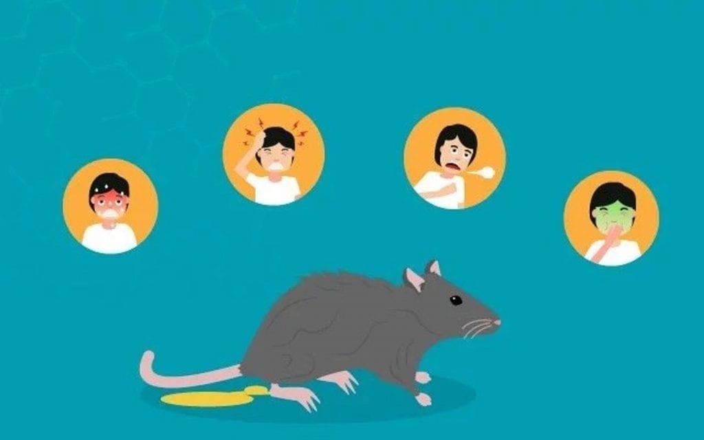 Leptospirose – o que é? Sintomas, tratamento e formas de prevenção