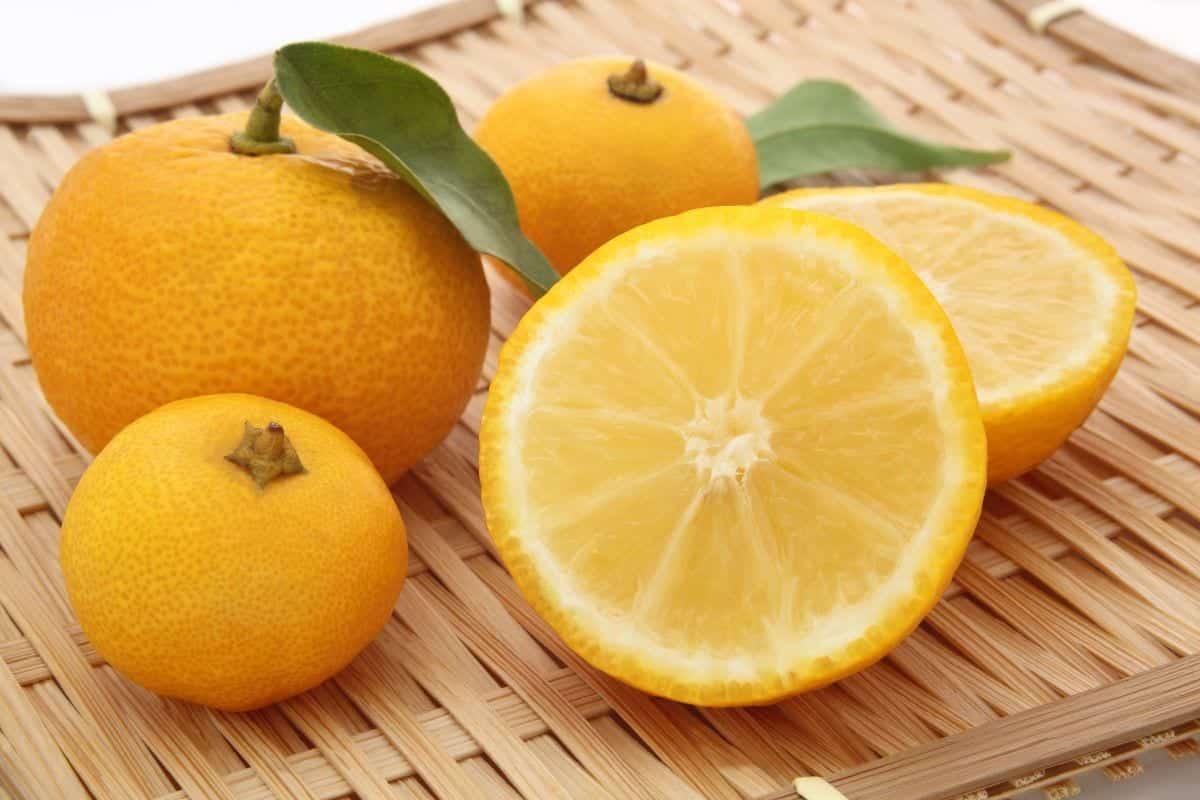 Yuzu - Quais as utilidades do limão japonês, preço e produção