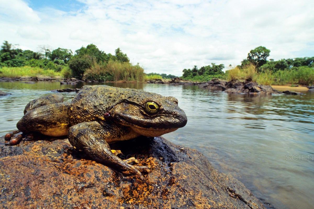 10 animais gigantes que podemos encontrar na natureza