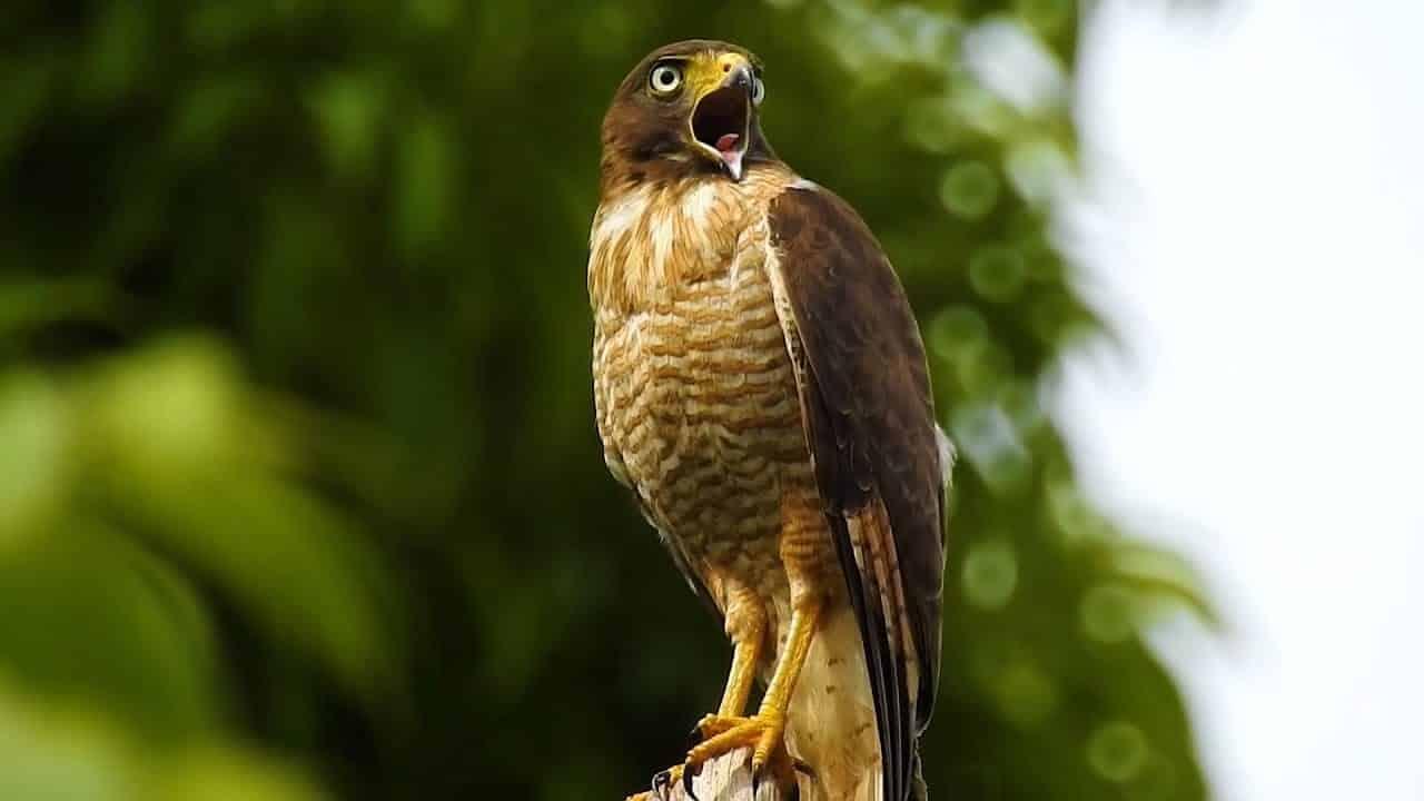 Animais do cerrado - lista de 20 animais deste bioma brasileiro