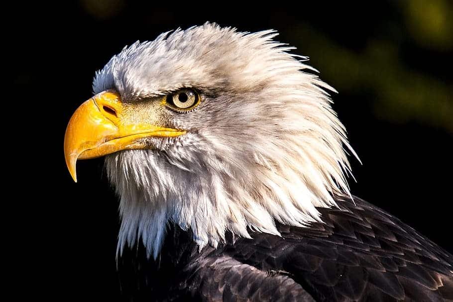 Aves de rapina - Grupo, características e habilidades de caça
