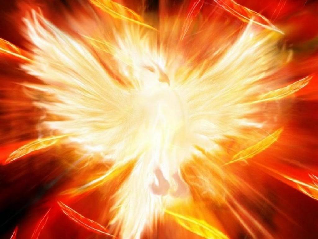 Fênix - História por trás de um dos mais famosos seres mitológicos