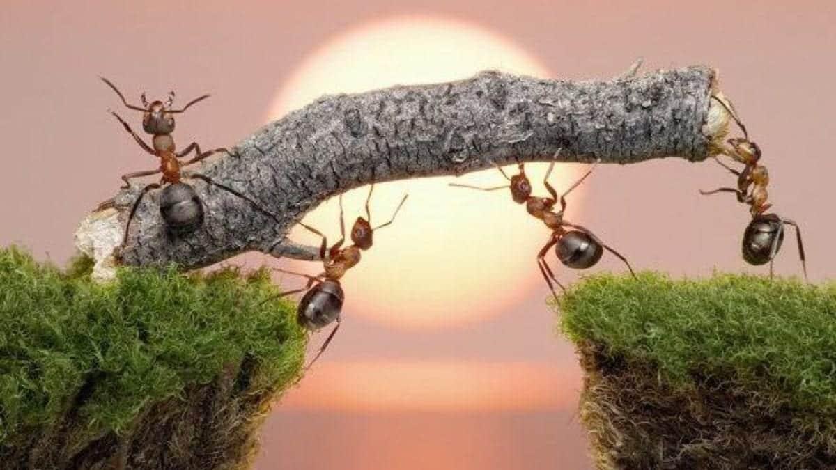 Formigas - características, organização e curiosidades
