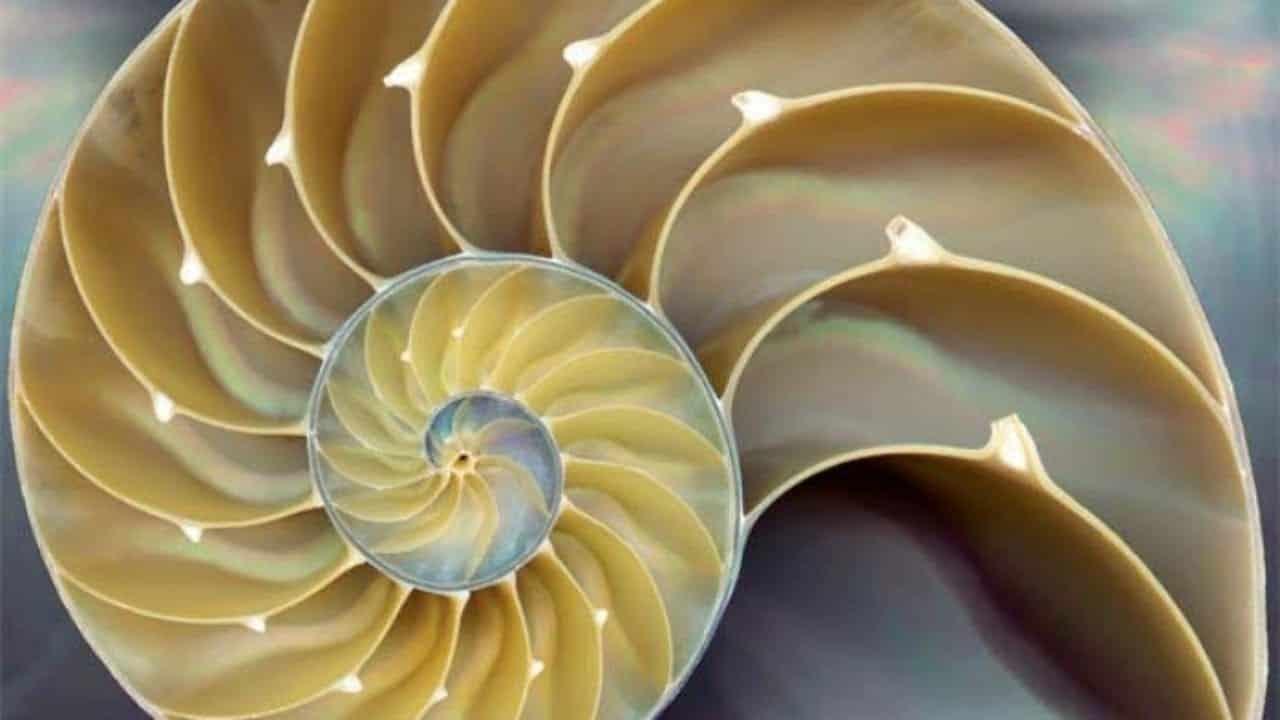 Número de ouro - a representação matemática da perfeição