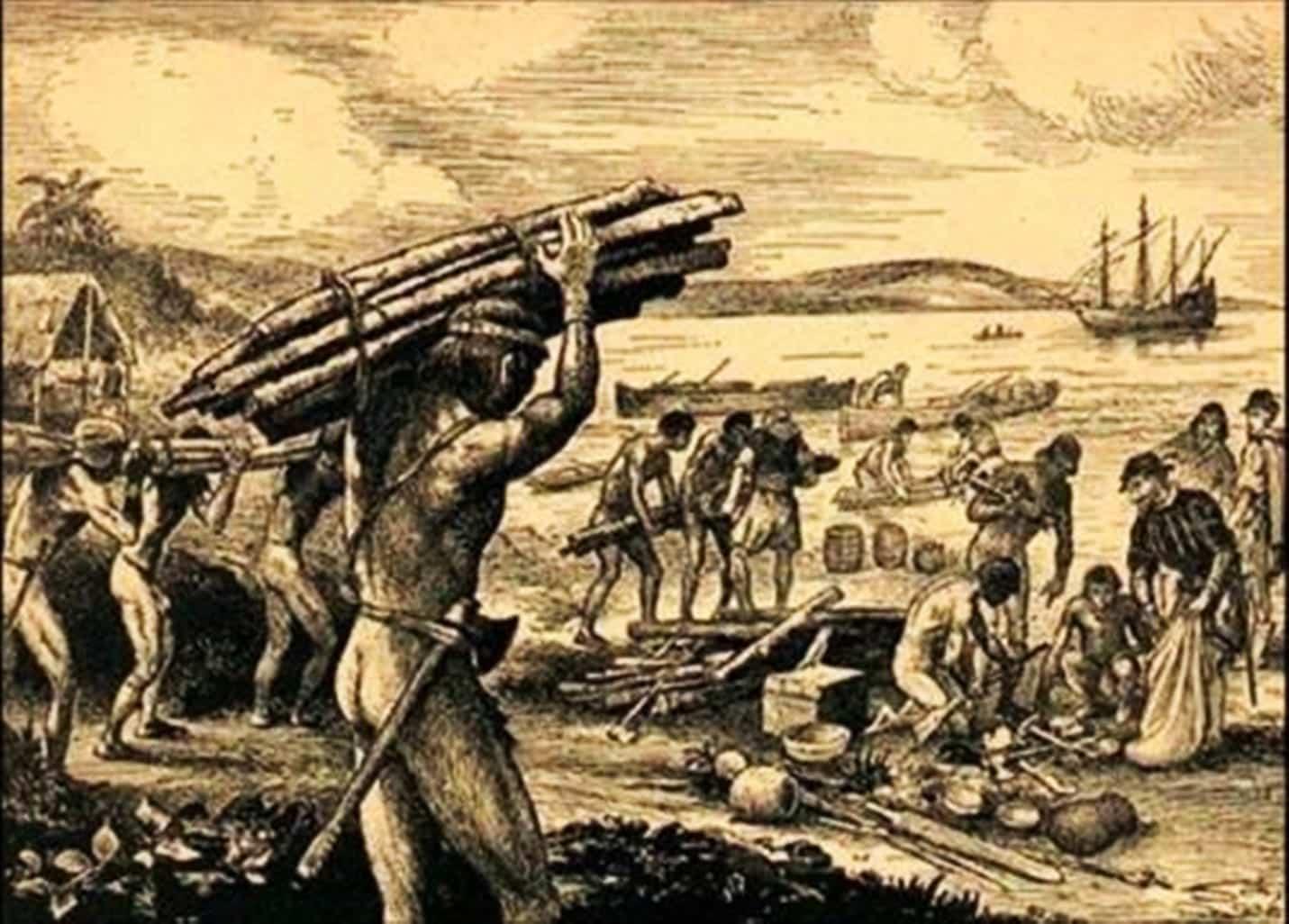 Pau-brasil - história e curiosidades sobre a árvore que deu nome ao país