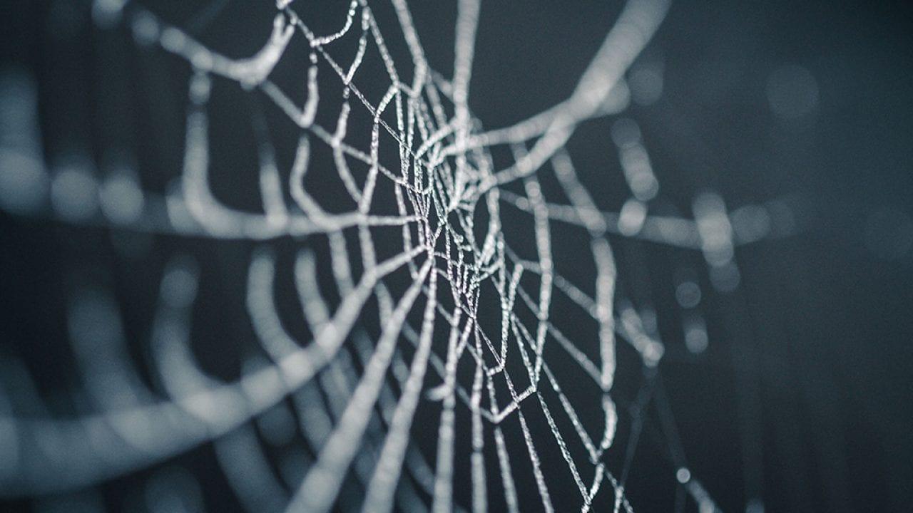 Teias de Aranha - De que são feitas, utilidades e por que são grudentas?