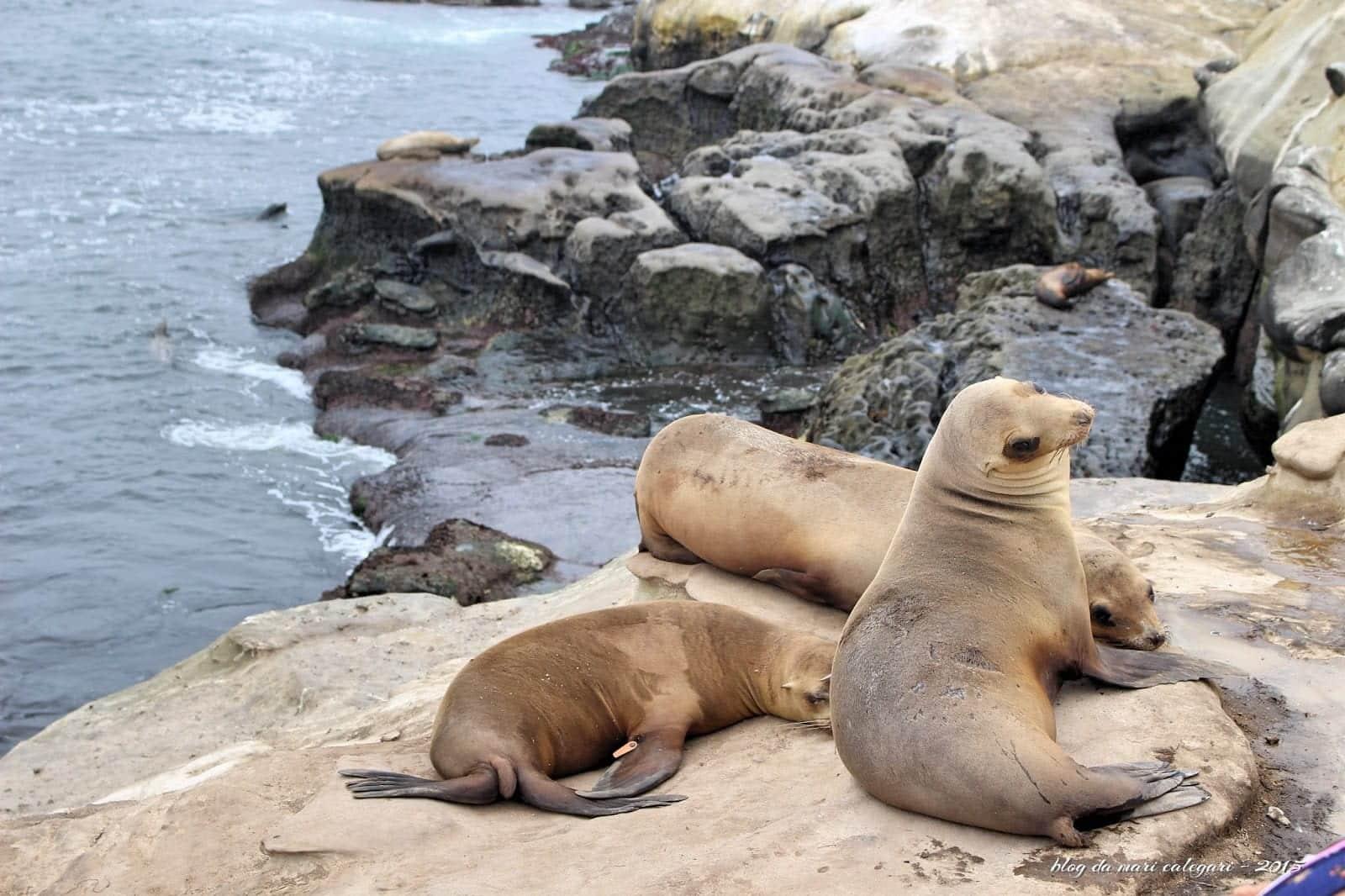 Leão-marinho - Características, onde vivem e espécies