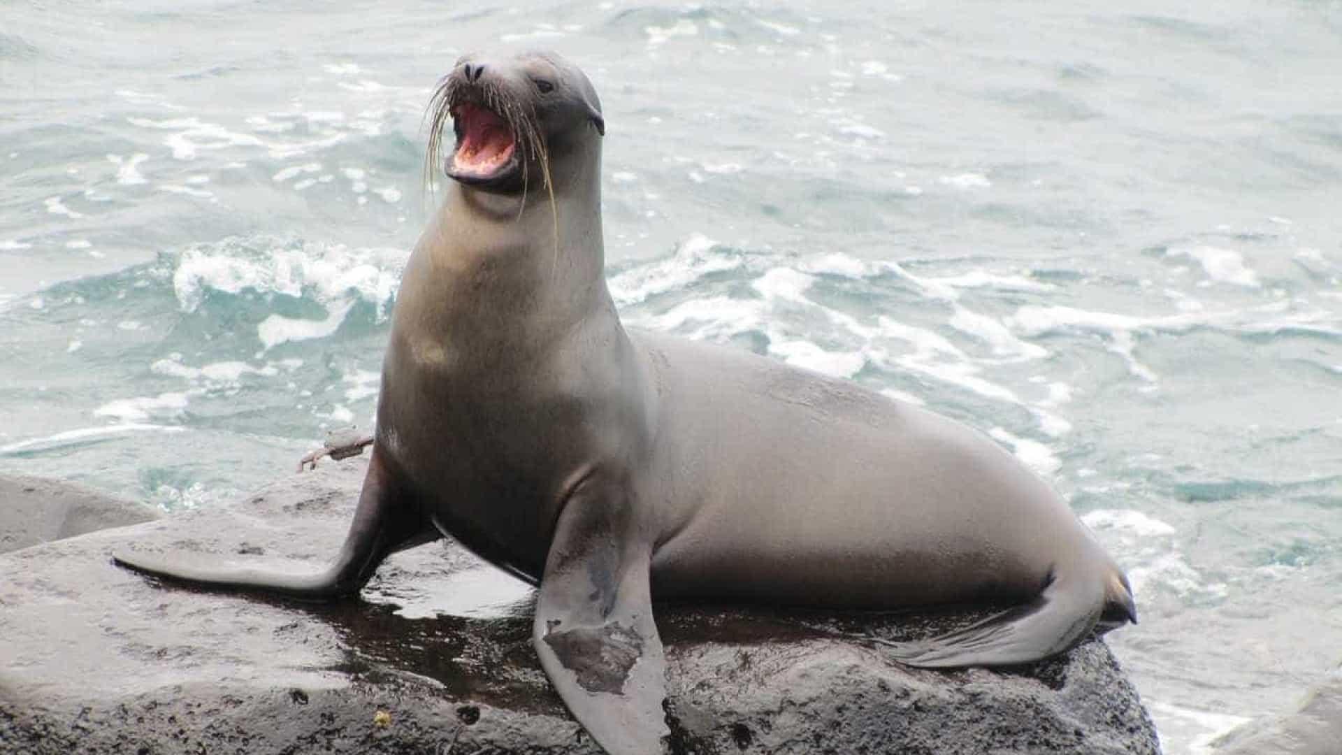 Leão-marinho - Características, hábitos, onde vivem e espécies