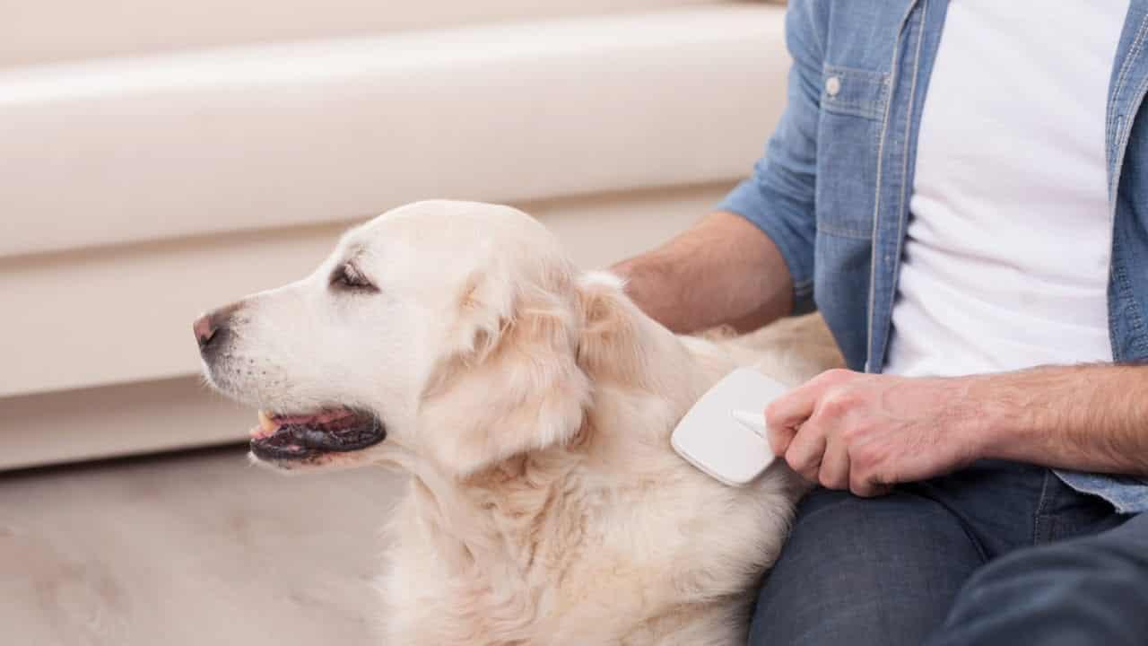 Pulgas - Como detectar, prevenir e tratar