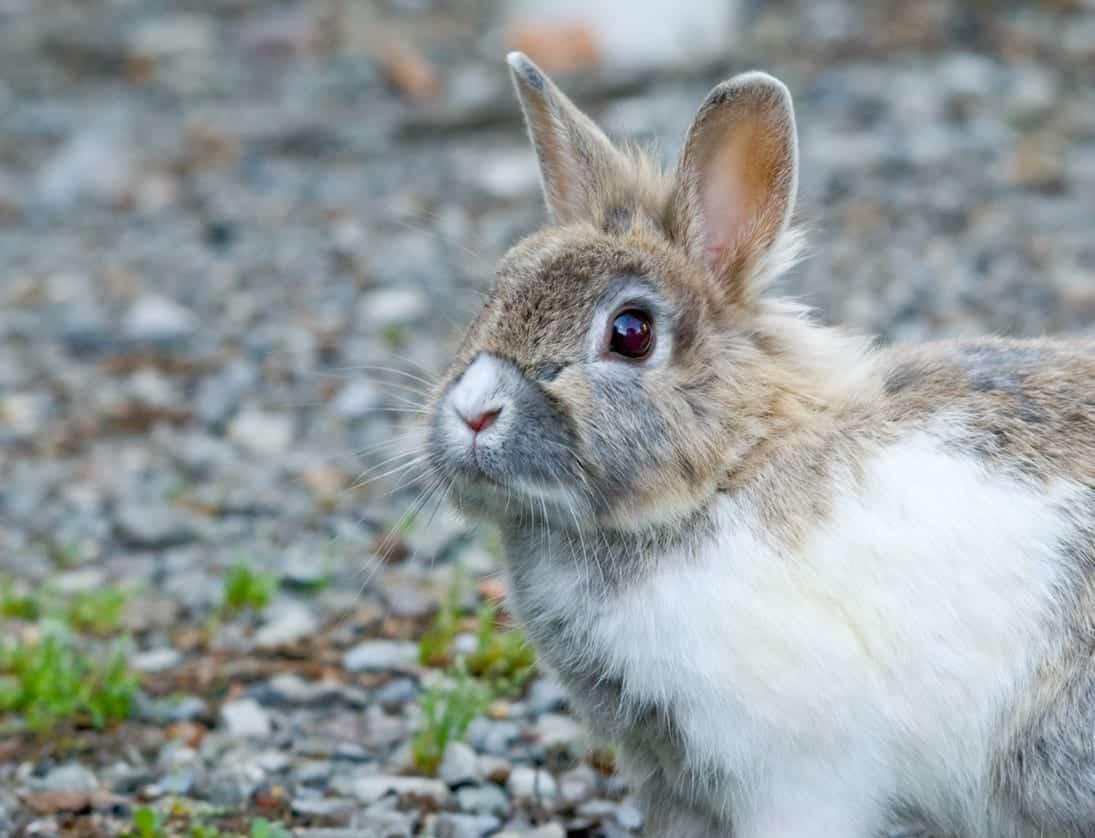 Animais de estimação - quais os bichos indicados para pequenos espaços