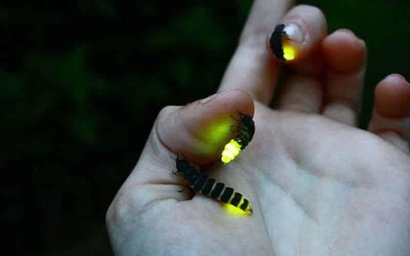 Animais que brilham no escuro