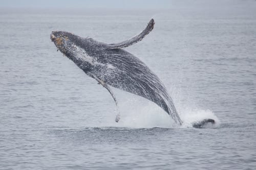 Baleias - características e principais espécies ao redor do mundo