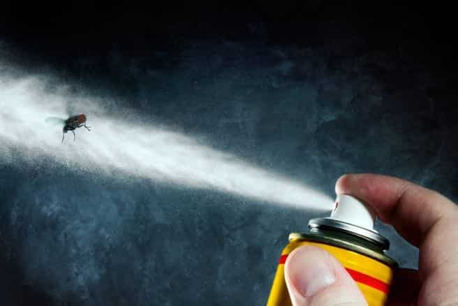 Como espantar moscas - Conheça 9 métodos caseiros