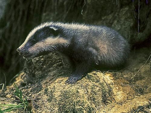 Curiosidades sobre animais - 45 fatos que você ainda não sabia