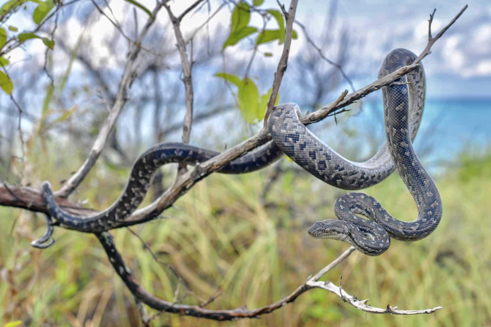 Tipos de cobras - características e principais diferenças entre espécies