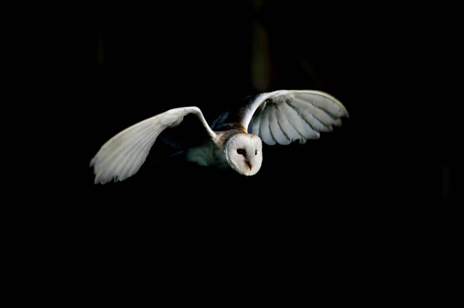 Corujas - principais hábitos, características e curiosidades sobre as aves