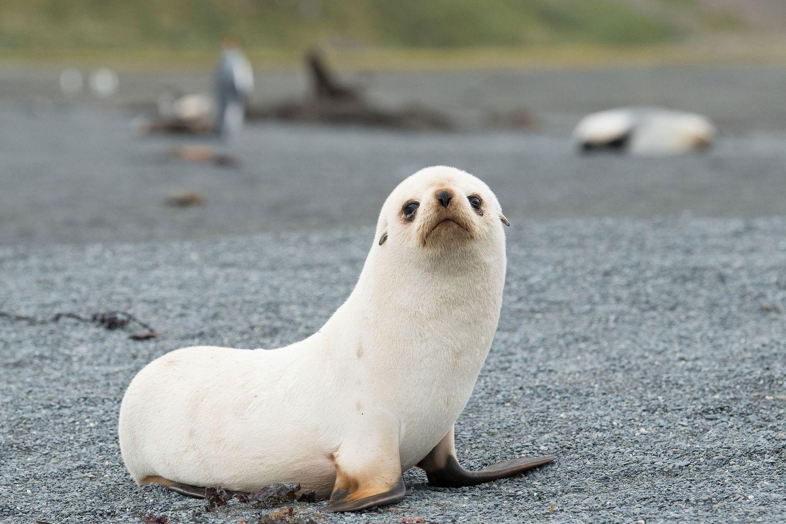 Lobos-marinhos - O que são, como vivem e onde encontrá-los