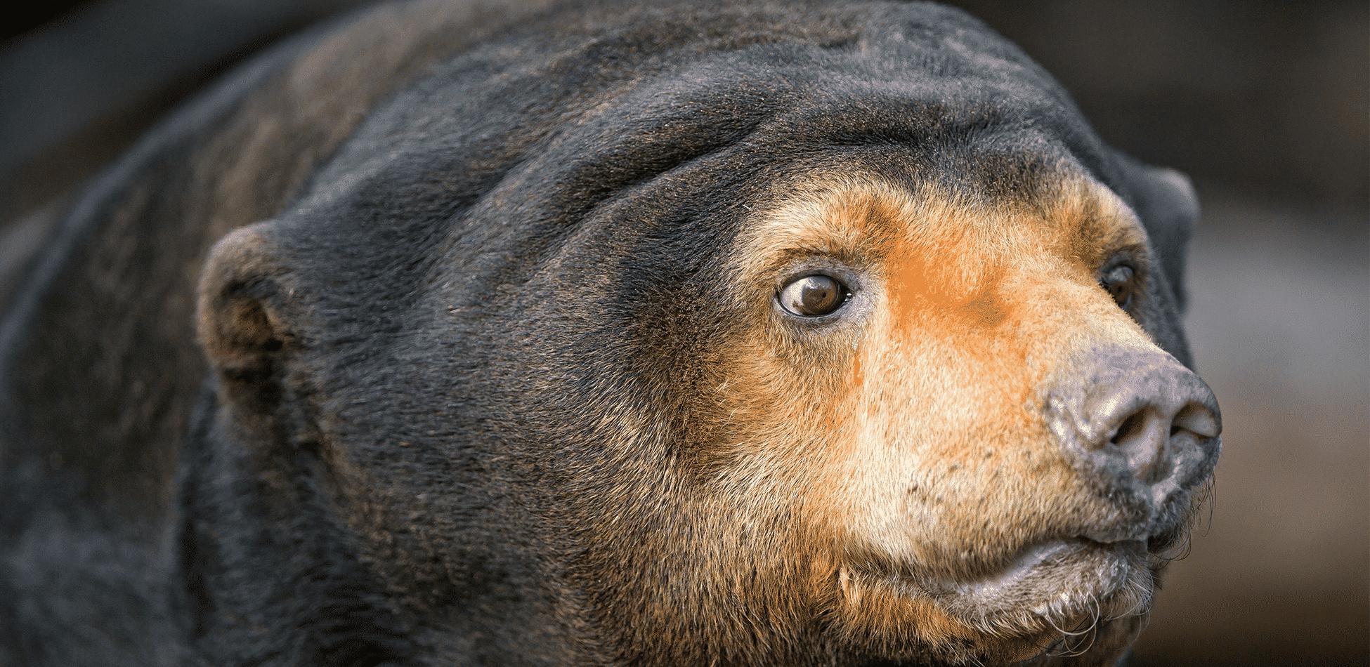 Ursos - Conheça seus hábitos, reprodução e suas espécies