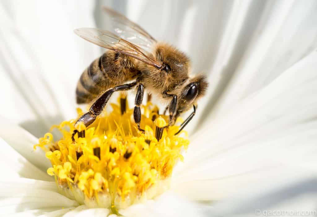 Abelhas – Características, importância para a ecologia e produção de mel