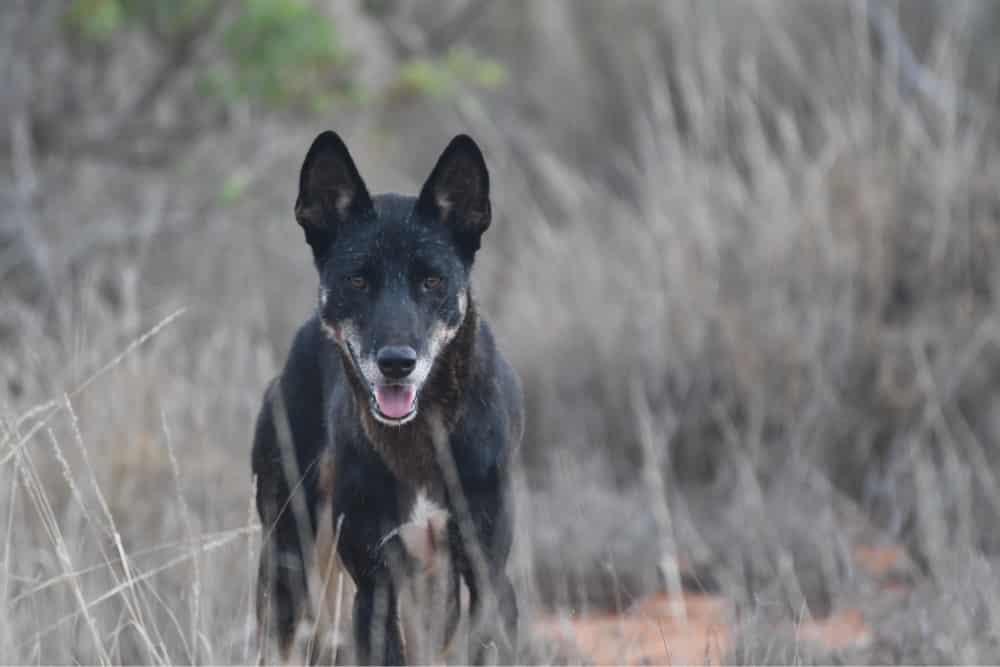 Curiosidades sobre cachorros - 22 sobres sobre os animais domésticos